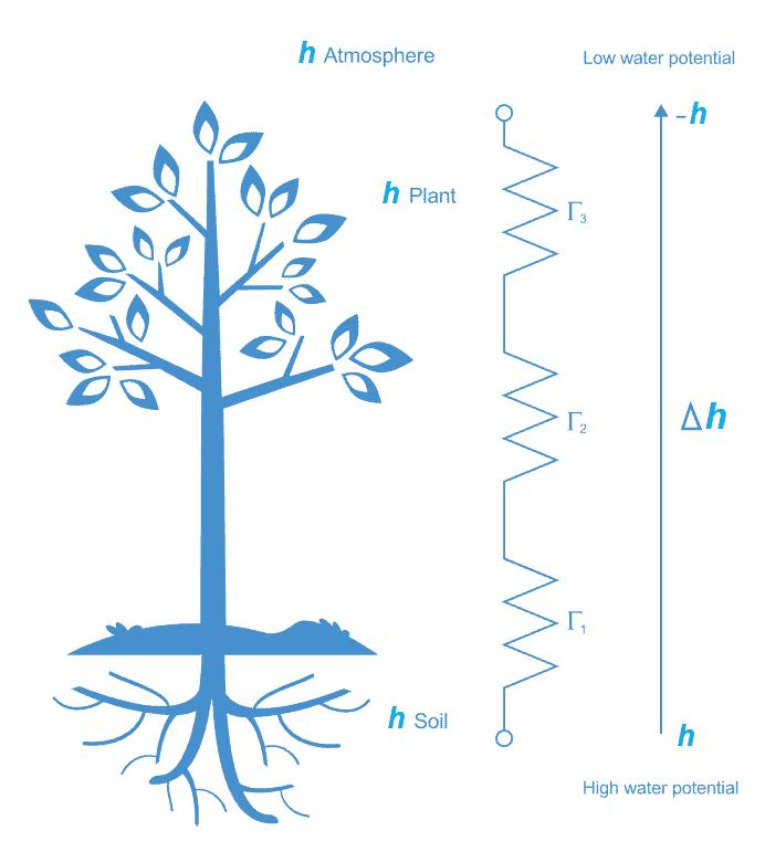 continuo suelo planta atmosfera