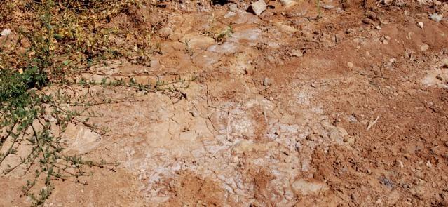 Salinidad del suelo